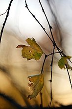 Farbaufnahme,Farbe,beleuchtet,Fotografie,Morgen,Close-up,Herbst,Sonne