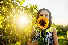 Sonnenblume,helianthus annuus,Portrait,halten,frontal,Sonnenlicht,Mädchen,Weinberg