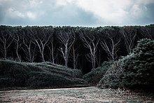 Ecke,Ecken,Dunkelheit,Baum,Wald,Dummheit,Italien,Sardinien