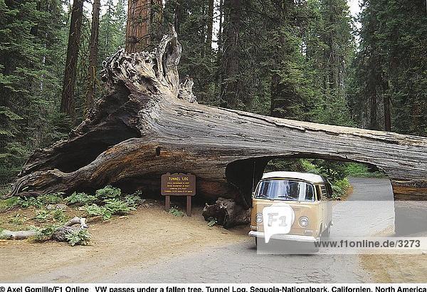 Camper van Unterquerung abgefallener Baum Giant Sequoia (Riesenmammutbaum Giganteum)  Sequoia National Park  Kalifornien  USA Camper van Unterquerung abgefallener Baum Giant Sequoia (Riesenmammutbaum Giganteum), Sequoia National Park, Kalifornien, USA
