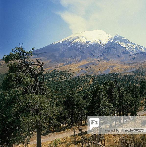 Trees with volcano in background  Popocatepetl Volcano  Mexico