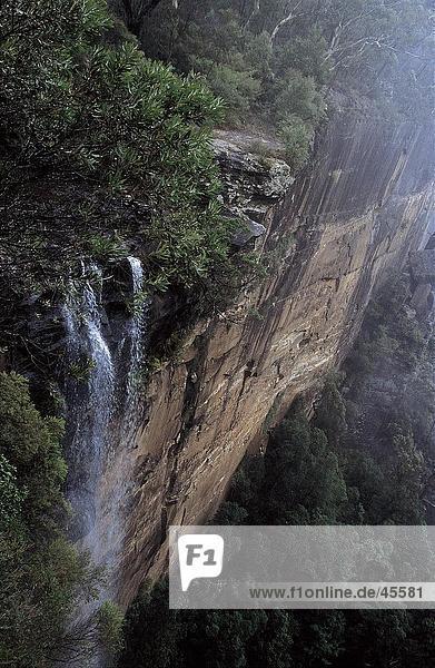 Wasserfall im Wald  Fitzroy Falls  New South Wales  Australien
