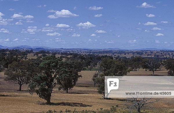 Bäume auf der Landschaft  New South Wales  Australien