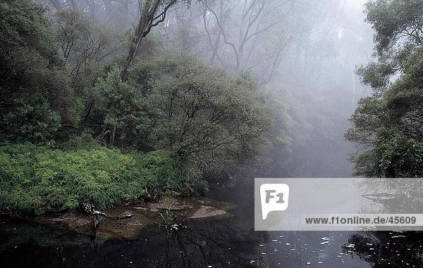 Nebel über River  Cabramatta Creek  Sydney  New South Wales  Australien