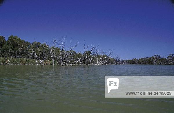 Bare Gum Bäume im Fluss  Murray River  Australien