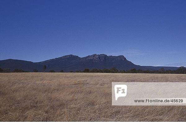 Trocknen Sie im Feld Gras und Bergen im Hintergrund  Grampians  Victoria  Australien