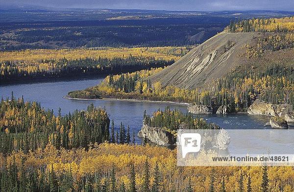 River fließt durch Wald  Yukon River  Yukon  British Columbia  Kanada