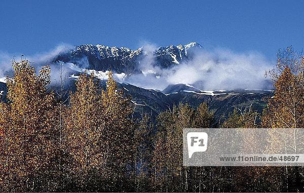 Bäume mit Gebirge im Hintergrund  Chugach Mountains  Kenai-Halbinsel in Alaska  USA