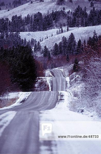 Straßenlauf durch Wald  British Columbia  Kanada