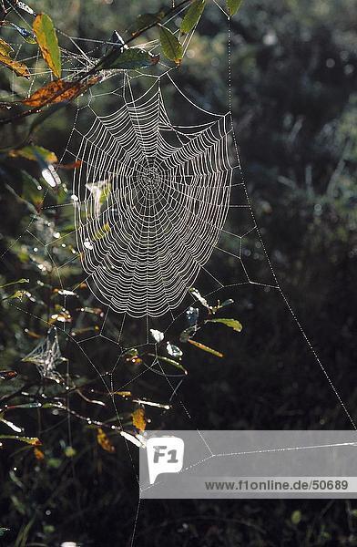 Close-up of spider web  Canada  North America