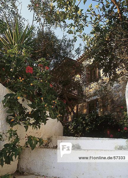 Stufe Wohnhaus über frontal Ast Griechenland überwachsen Peloponnes