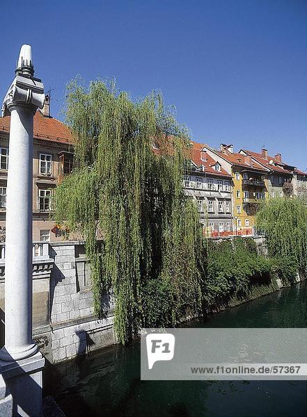 Ljubljana Hauptstadt Flussufer Ufer weinen Baum Gebäude Slowenien