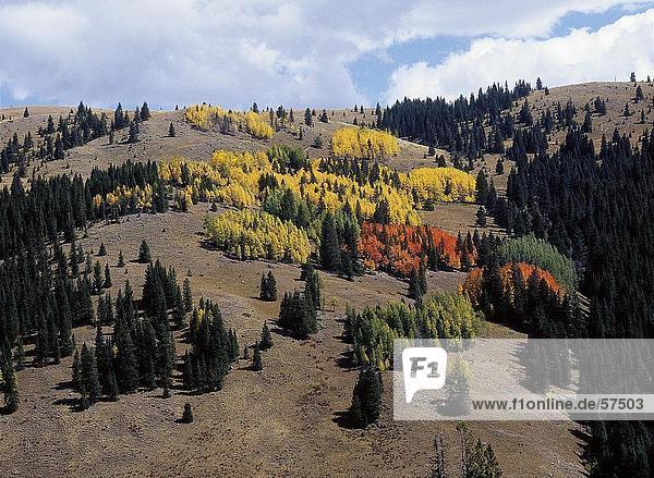 Bäume auf eine Landschaft bei bewölktem Himmel  Rocky Mountain National Park  Colorado  USA