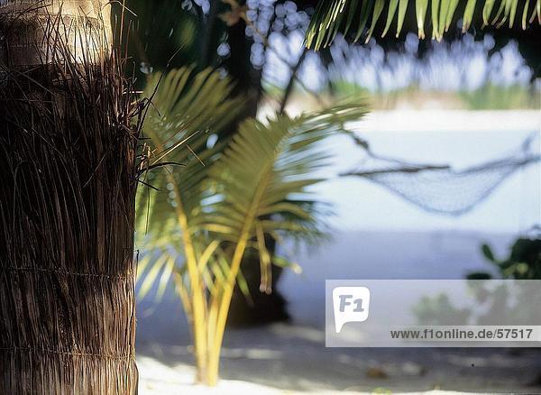 Nahaufnahme einer Palme mit einer Hängematte im Hintergrund