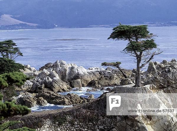 Baum auf einer felsigen Küste  Carmel  Kalifornien  USA