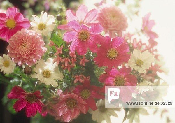 Nahaufnahme der Blumenstrauß