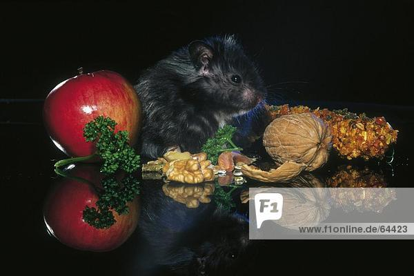 Close-up of hamster and walnuts