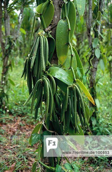 Nahaufnahme nass Pflanze  Réunion  Frankreich