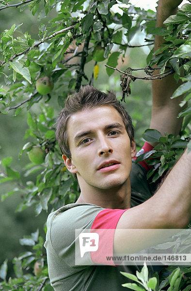 Junger Mann unter Apfelbaum