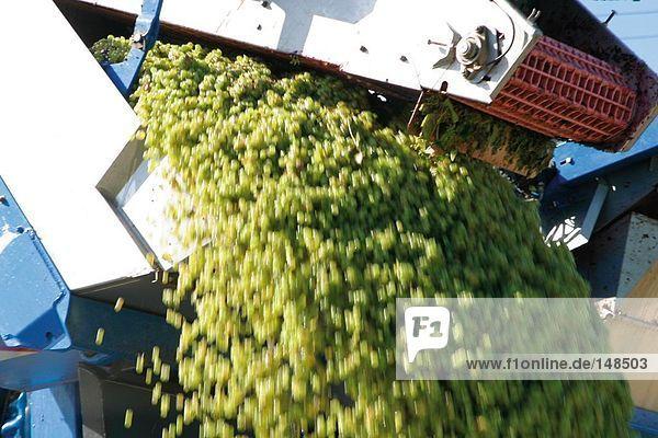Harvester in Weingarten Harvester in Weingarten