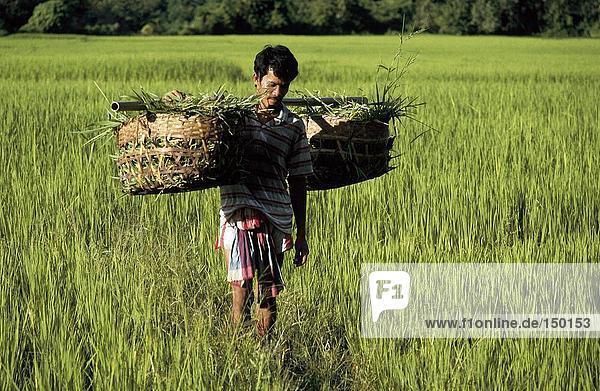 Landwirt Durchführung Körbe in Reisfeld  Thailand
