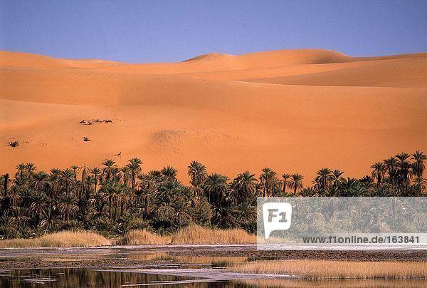 Dünen mit Palmen in Wüste  Libysche Wüste  Fessan  Libyen