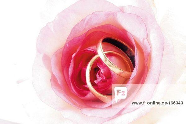 Eheringe auf Rose
