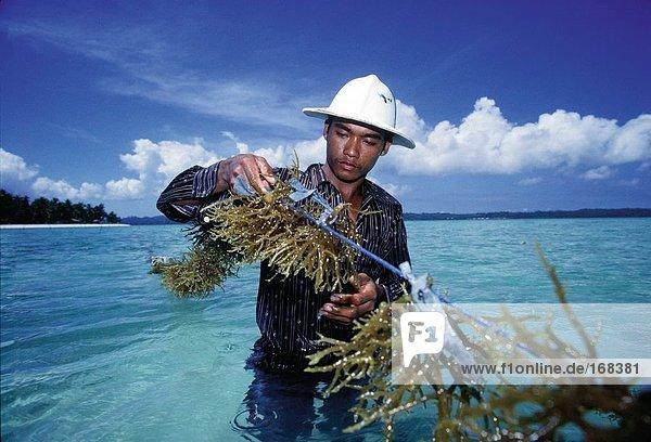Reisen  Indonesien  Sulawesi