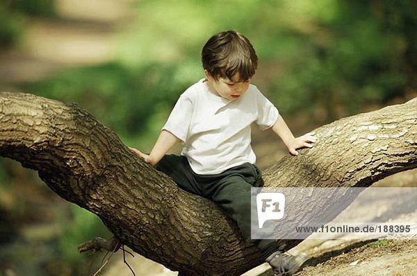 Junge auf einem Baum sitzend Junge auf einem Baum sitzend