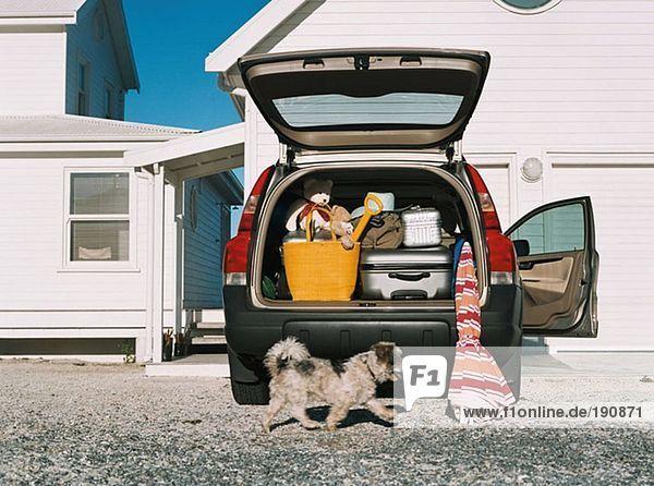 Hund mit dem Auto voller Gepäck
