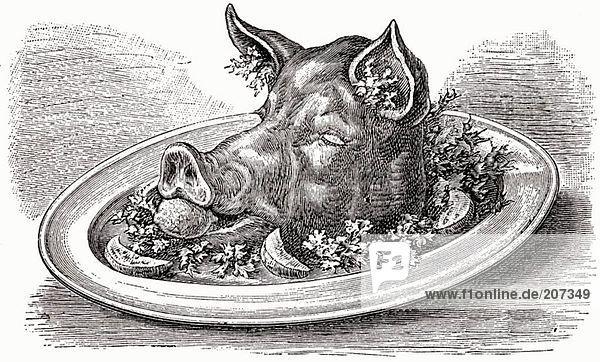 Schweinekopf (Illustration)