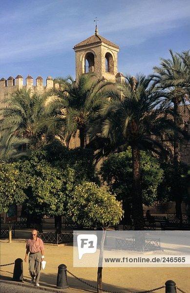 Bäume vor Schloss  Alcázar de Los Reyes Cristianos  Cordoba  Andalusien  Spanien