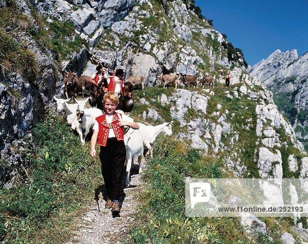 10074518  Alp  Alp  Abzug  Folklore  Tradition  Nanny Ziegen  Geißen  Berge  Appenzell  Schweiz  Europa  junge