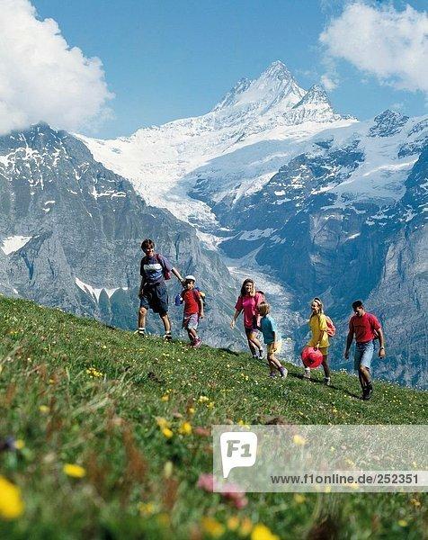 10208923  alpine  Alps  mountains  Switzerland  Europe  mountain walking  Bernese Oberland  flowers  family  panorama  walking