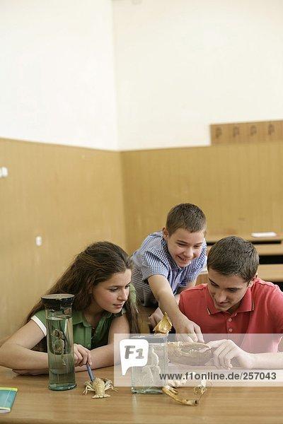 Schüler betrachten Krebsmodelle