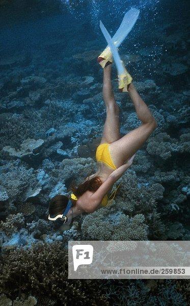 Sport & Erholung. Tauchen. Diver