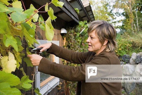 Frau Wohnhaus schneiden Pflanze klettern