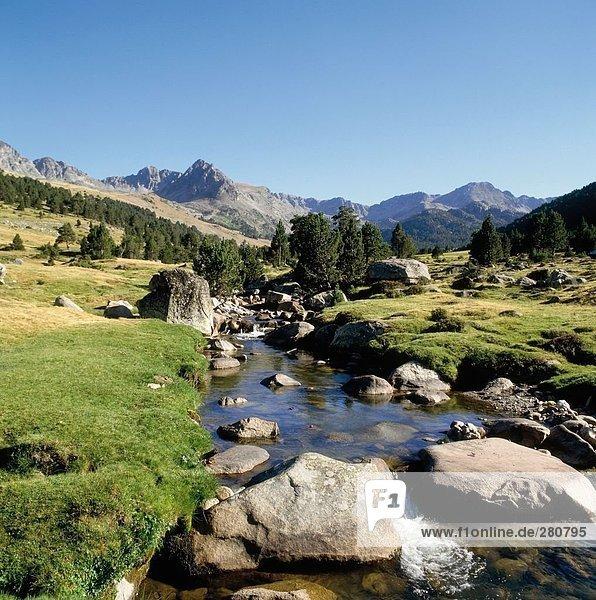 Strom  der durch Wald  Andorra