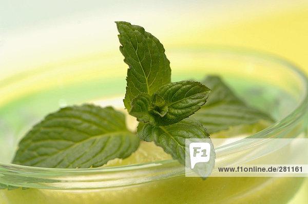 Minze im Glas auf Zitronenscheibe  Nahaufnahme