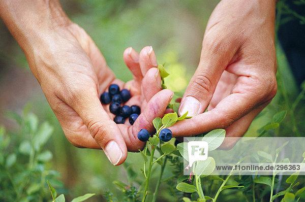 Kommissionierung Blueberry.