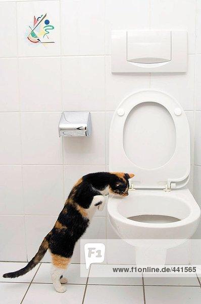 Cat suchen in WC-Schüssel