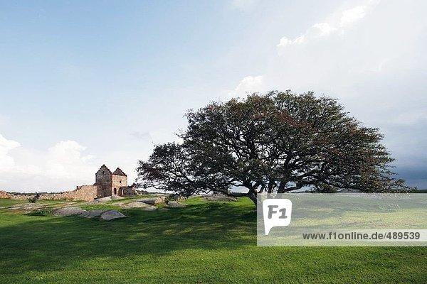 Alte Ruinen der Burg in der Nähe von Baum zu Landschaft  Hammershus  Bornholm  Dänemark