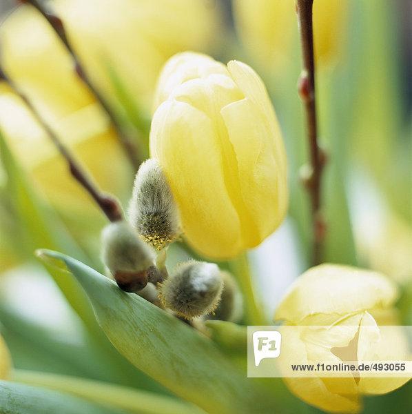 Ein Bukett mit Tulpen und Korbweiden.