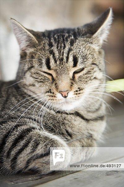 Eine Katze mit seinen Augen geschlossen.