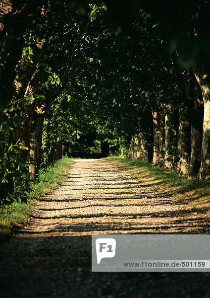Dirt road through woods