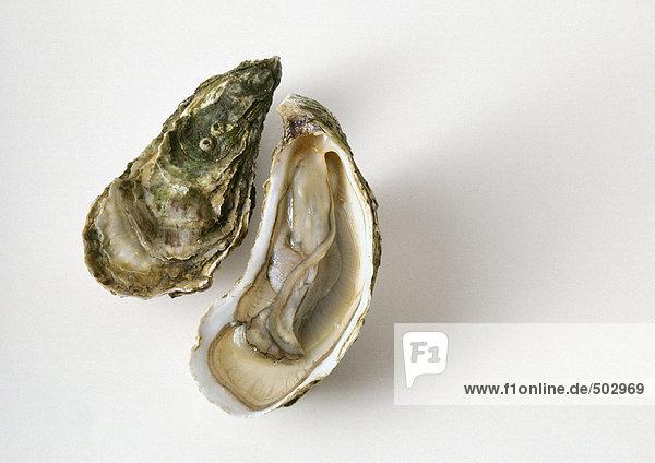 Austernschale und offene Austernhälfte  Nahaufnahme