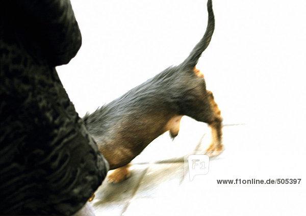 Fell- und Hundeträger  Teilansicht
