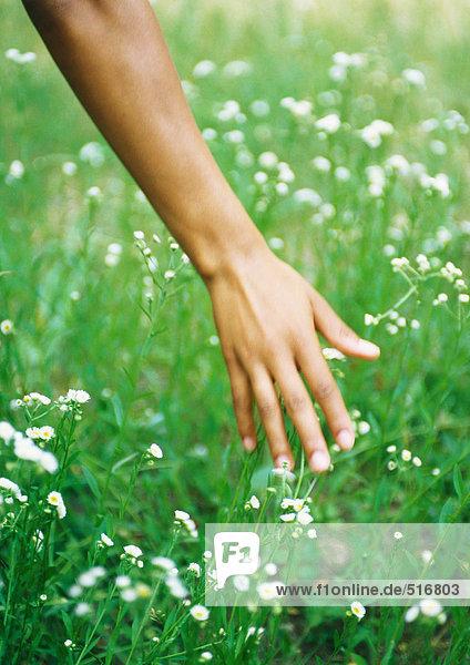 Hand berührendes Gras