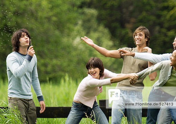 Junger Mann bläst Löwenzahn  während Freunde scherzen.