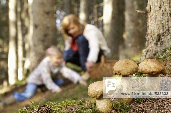 Mutter und Tochter suchen Pilze im Wald Mutter und Tochter suchen Pilze im Wald